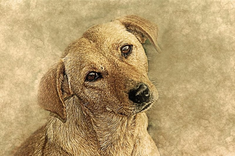 do animal commit suicide- reason-why-animal-attempt-suicide