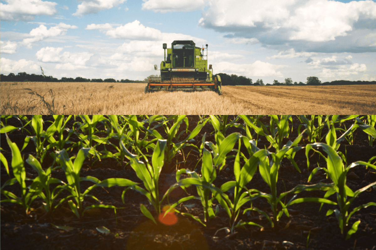 Indian Agriculture Sector In Trade And Sub-Sectors